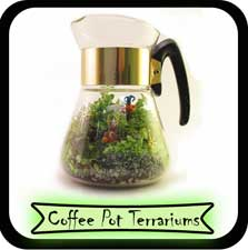 coffee pot terrariums
